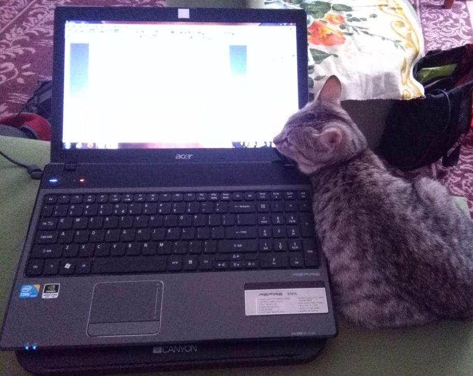 cat photo[12679]
